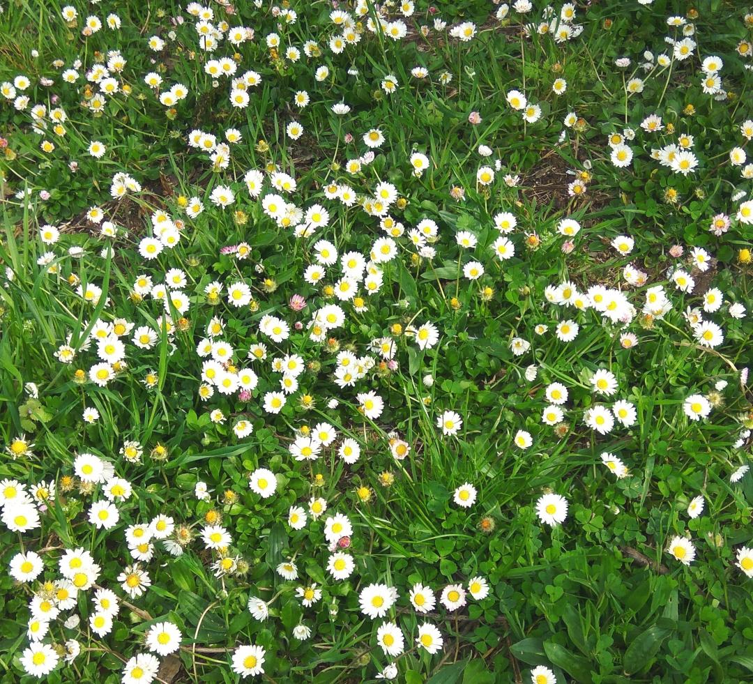 flores de la madre.jpg